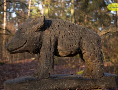 Das Burgwaldschwein